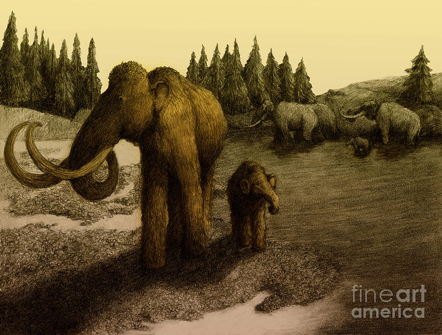 Mammoths Drawing  - Mammoths Fine Art Print