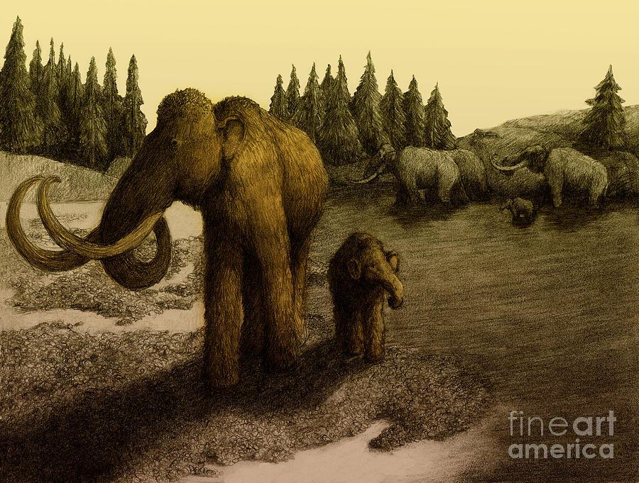 Mammoths Drawing