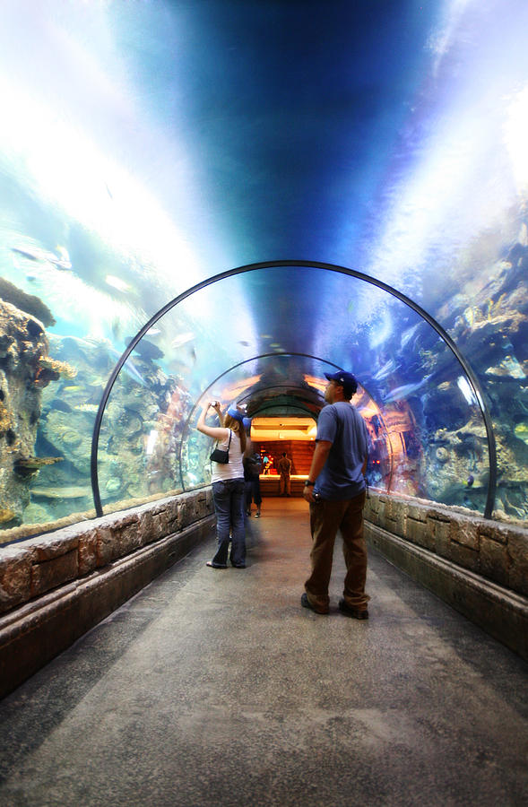 Dec 02,  · Located in Mandalay Bay, the aquarium is about a 40 min walk through and the ticket price includes: walking through the aquarium and a polar bear walk through. There are definitely some interesting fish and sharks but don't expect the best aquarium you've ever seen/5().