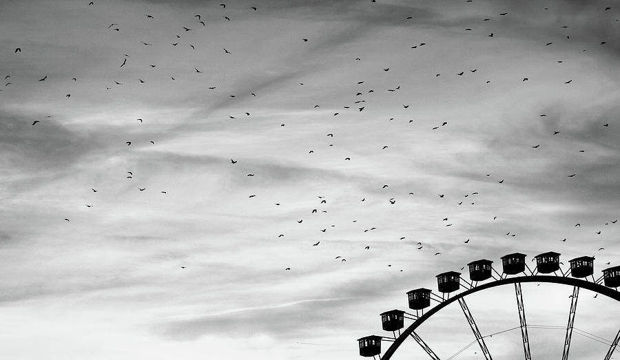 Many Birds Flying Over Giant Wheel In Berlin Photograph  - Many Birds Flying Over Giant Wheel In Berlin Fine Art Print