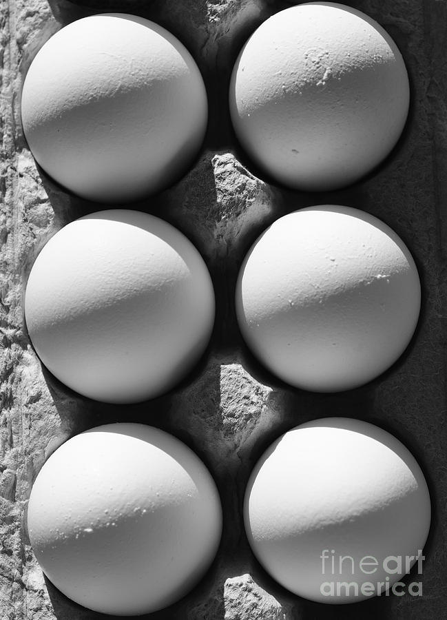 Eggs Photograph - Many Moons by Luke Moore