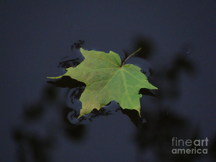 Mapleleaf Photograph  - Mapleleaf Fine Art Print