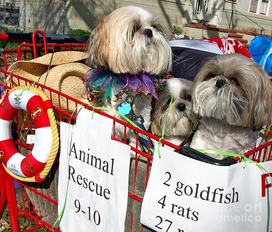 Mardi Gras Pekingese Pups Photograph