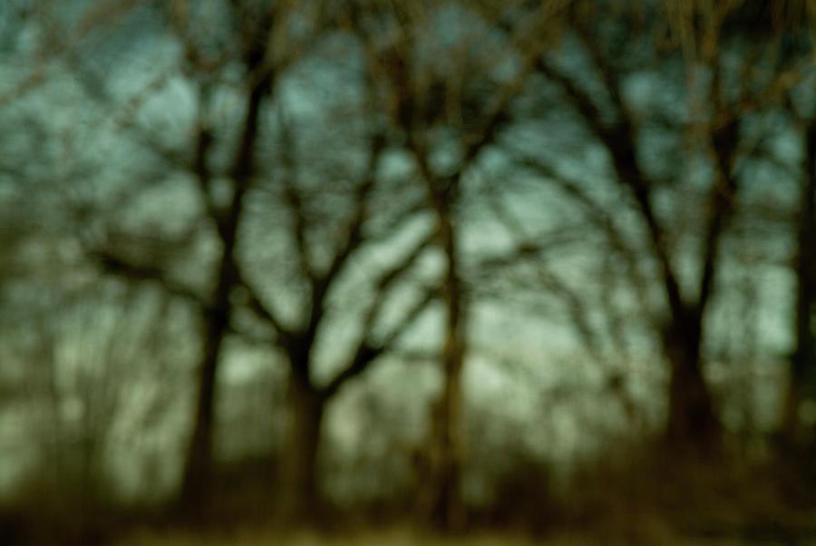 Marsh Photograph