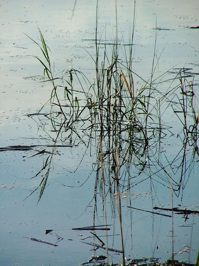 Marsh Grass Photograph