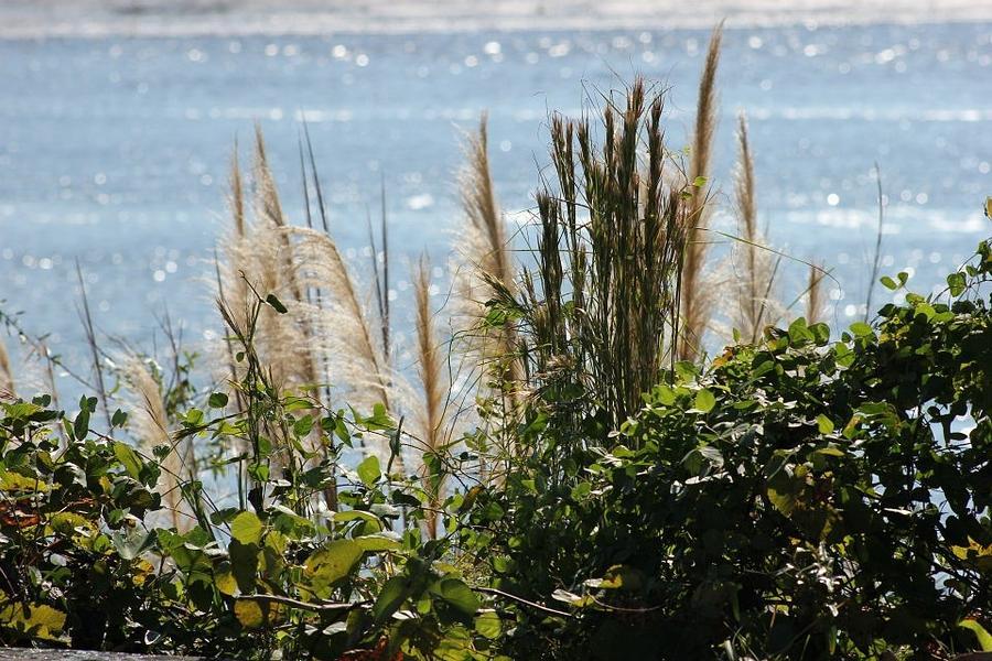 Marsh Photograph - Marsh by Static Studios