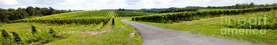Maryland Vineyard Panorama Photograph  - Maryland Vineyard Panorama Fine Art Print