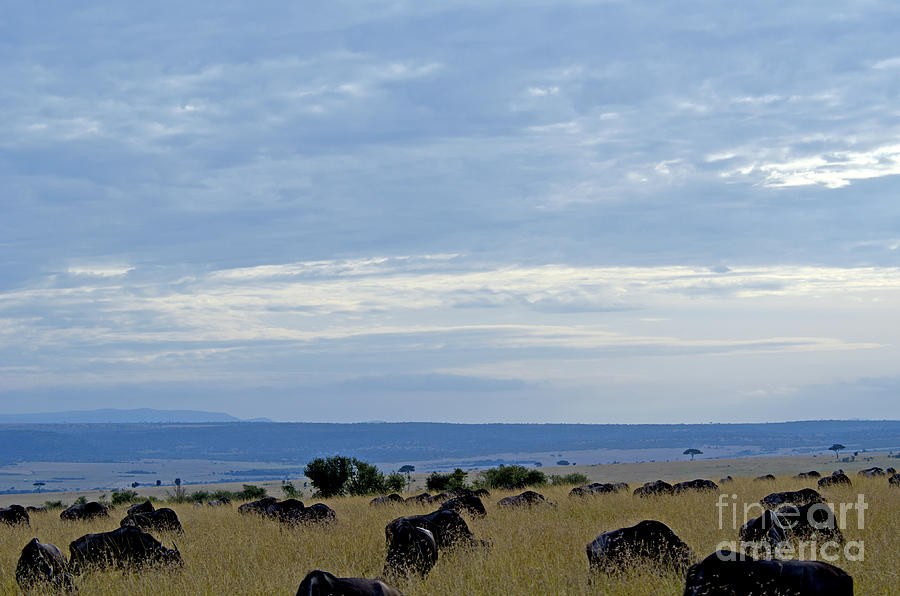 Masai Mara Digital Art - Masai Mara by Pravine Chester