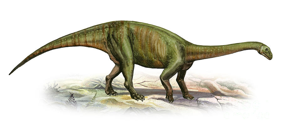 Horizontal Digital Art - Massospondylus Carinatus, A Prehistoric by Sergey Krasovskiy