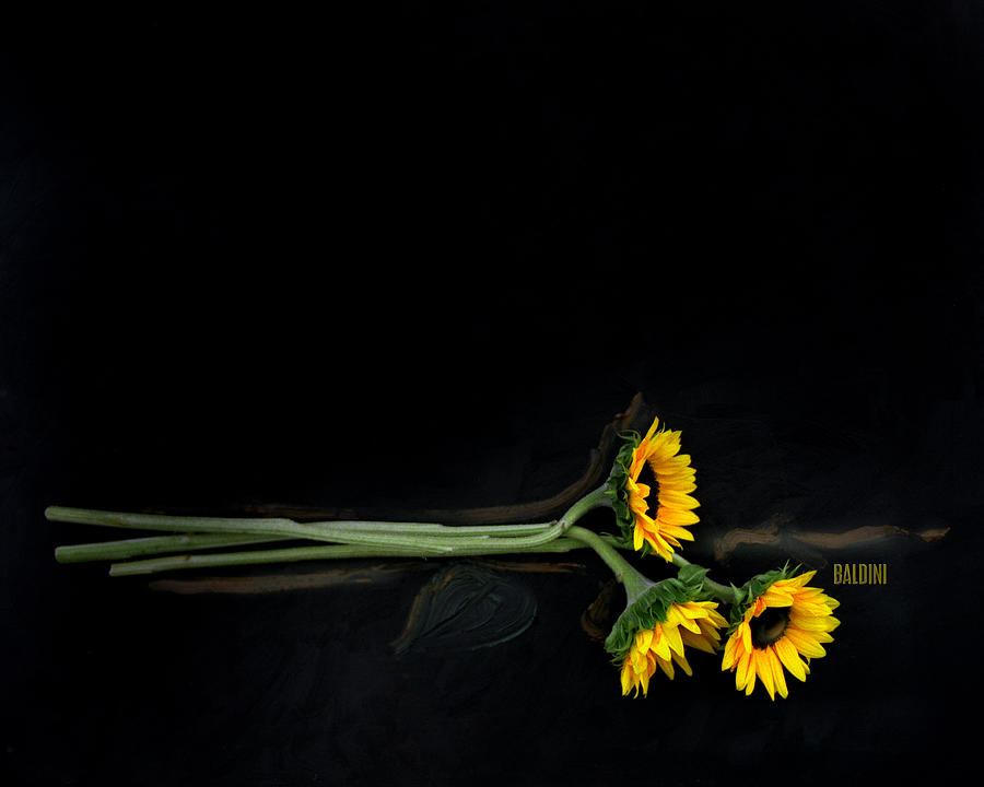 Master Sunflowers Photograph