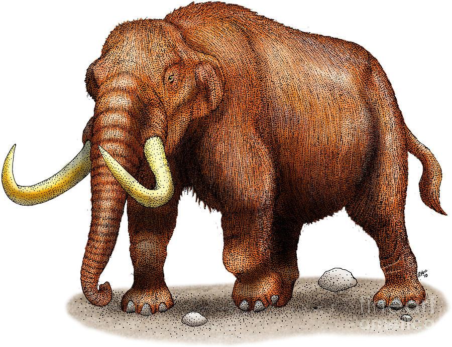 Mastodon Drawing