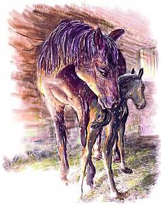 Maternal Bond Five Hours Old Arabian Mare With Newborn Foal Painting