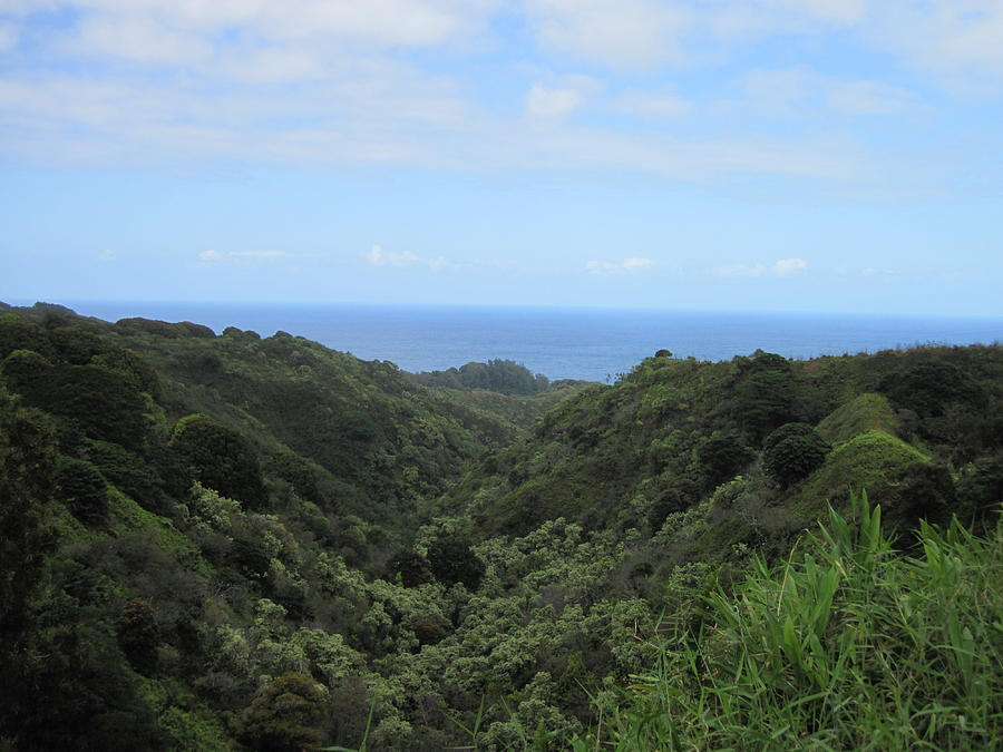 Maui Bluff Photograph