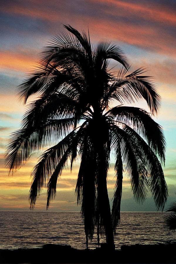 Maui Hawaii Sunset Palm Photograph  - Maui Hawaii Sunset Palm Fine Art Print
