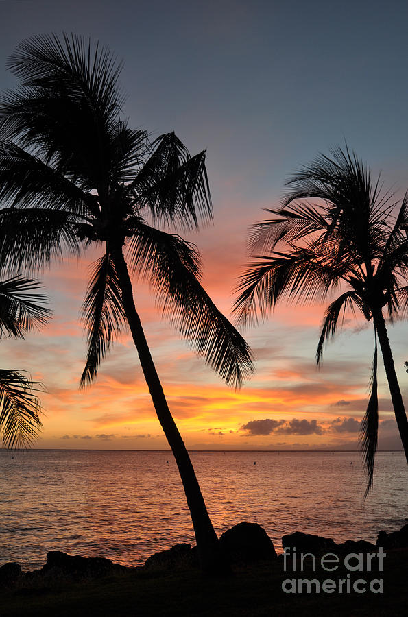 Maui Sunset Palms Photograph