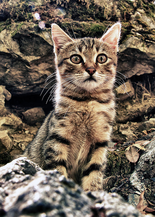 Alone Photograph - Mediterranean Wild Babe Cat by Stelios Kleanthous