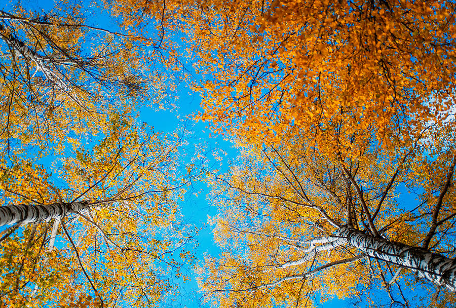 Meet In Heaven. Autumn Glory Photograph