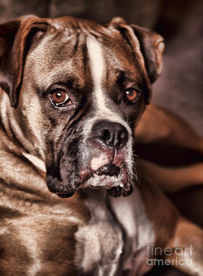 Boxer Photograph - Meet Rocky by Deborah Benoit