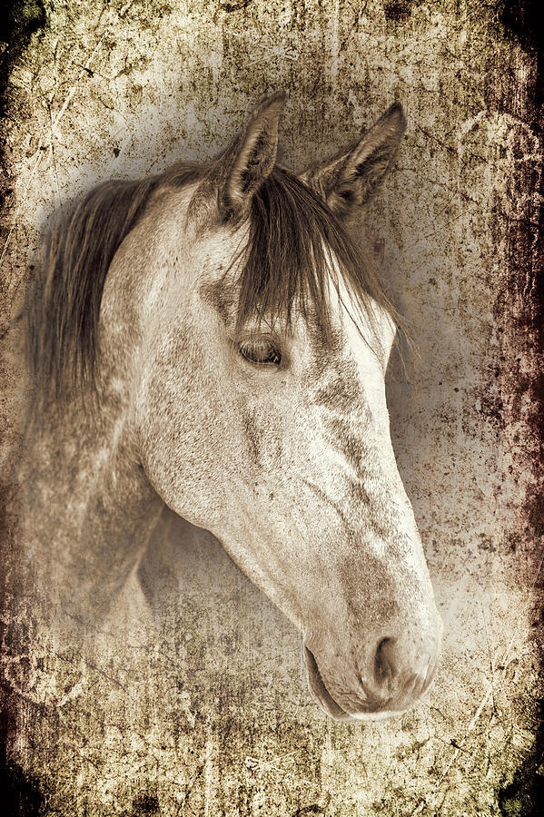 Meet The Andalucian Photograph  - Meet The Andalucian Fine Art Print