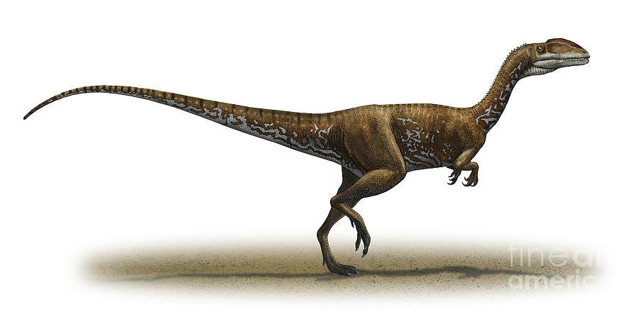 Megapnosaurus Kayentakatae Digital Art