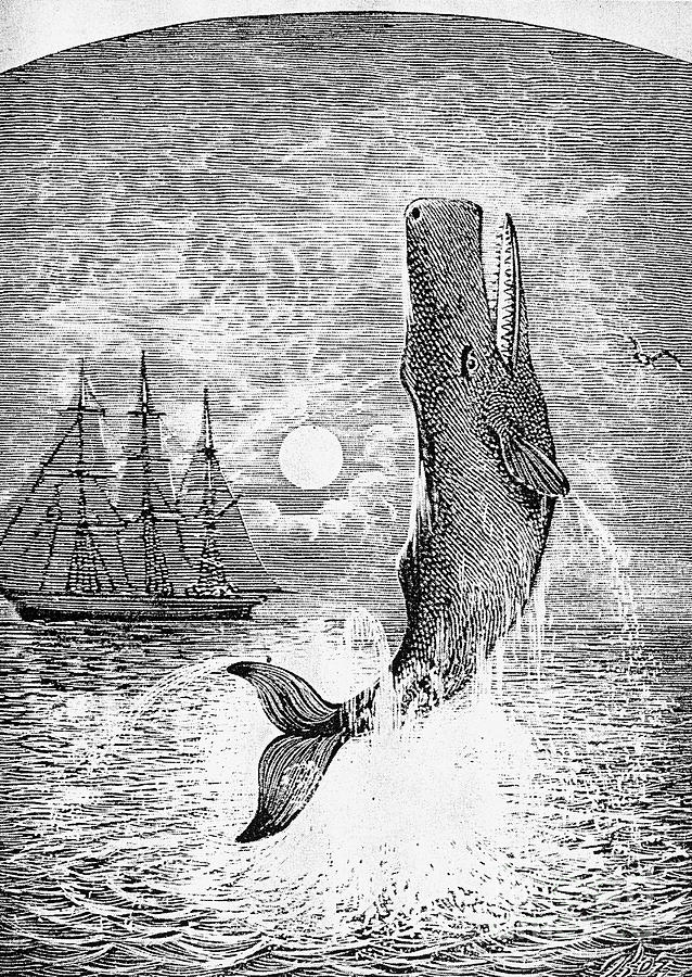 Melville: Moby Dick Photograph