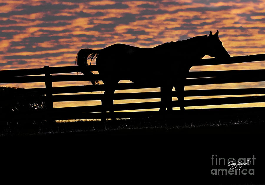 Memorial Day Weekend Sunset In Georgia - Horse - Artist Cris Hayes Photograph
