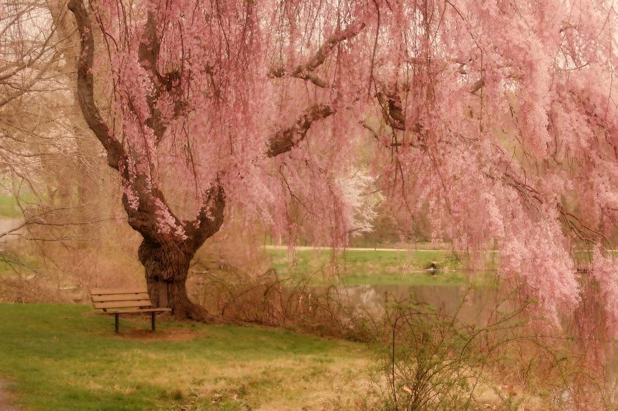 Memories - Holmdel Park Photograph