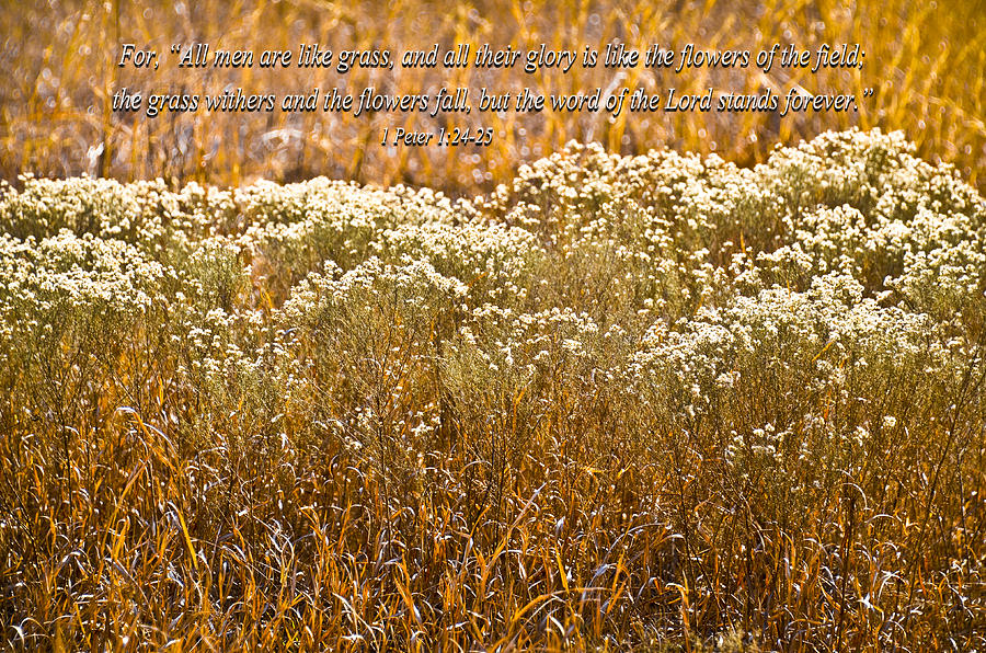 Golden Field Photograph - Men Are Like Grass by Carolyn Marshall