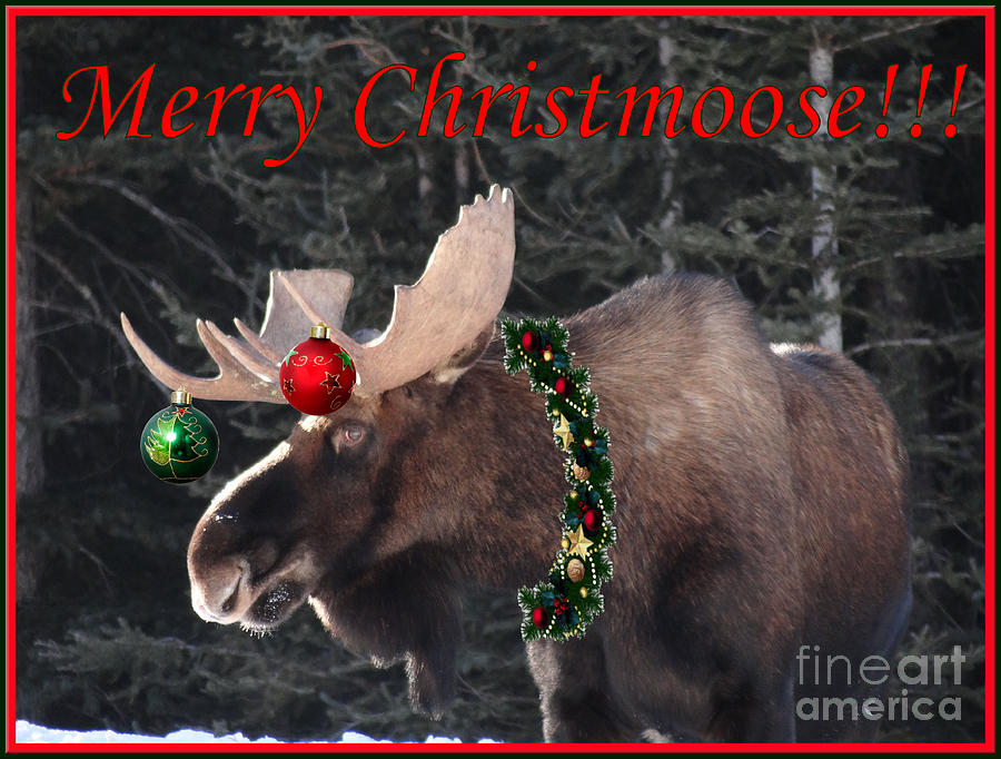 christmas banner Merry-christmoose-patricia-paterson