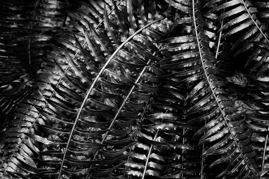 Metallic Ferns Photograph