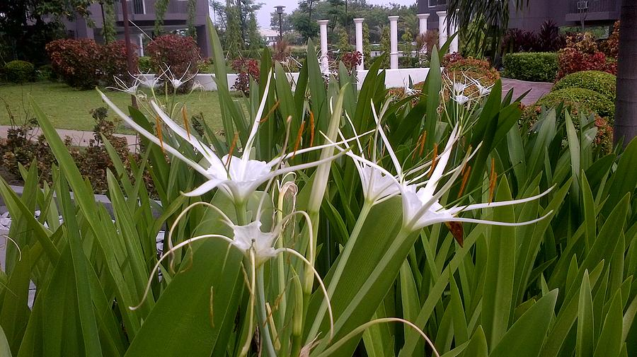 Meus Ortus Flora Photograph