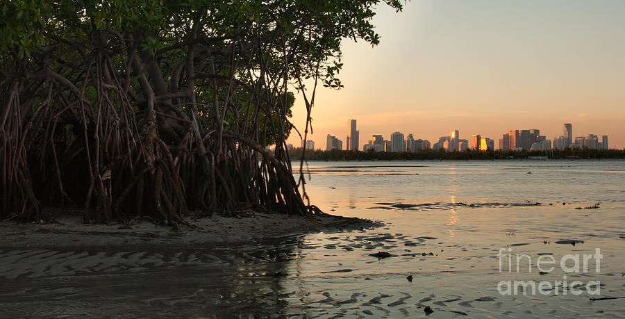 Miami With Mangroves Photograph