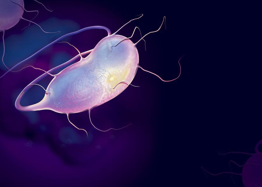 Microbes, Conceptual Artwork Photograph