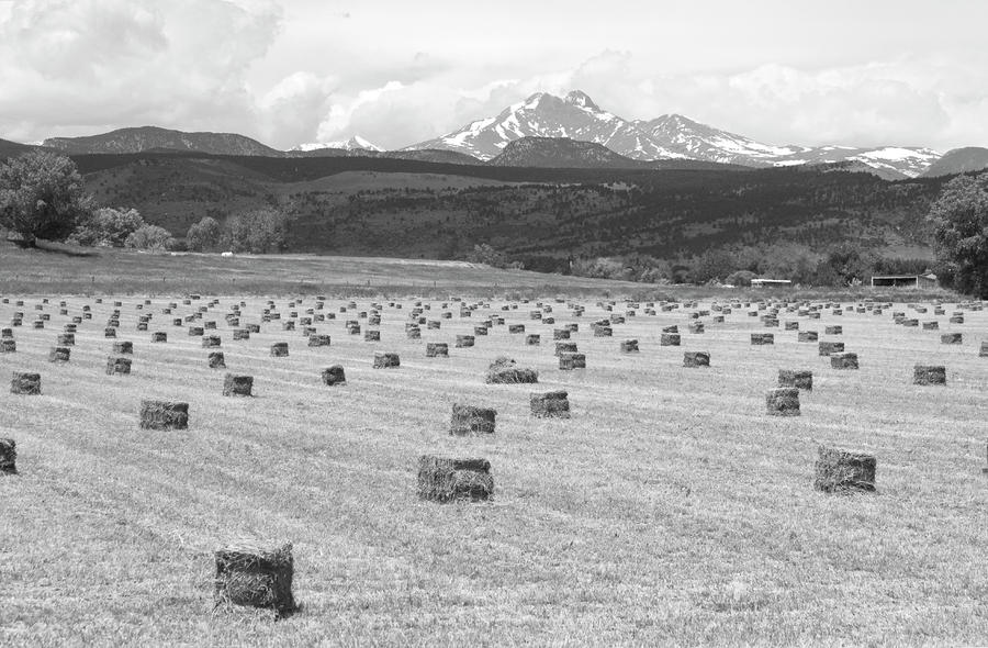 Mid June Colorado Hay  And The Twin Peaks Longs And Meeker Bw Photograph