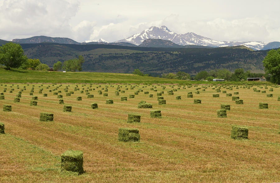 Mid June Colorado Hay  And The Twin Peaks Longs And Meeker Photograph