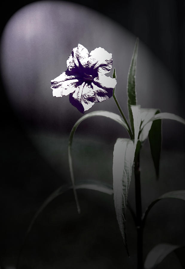 Midnight Bloom Digital Art