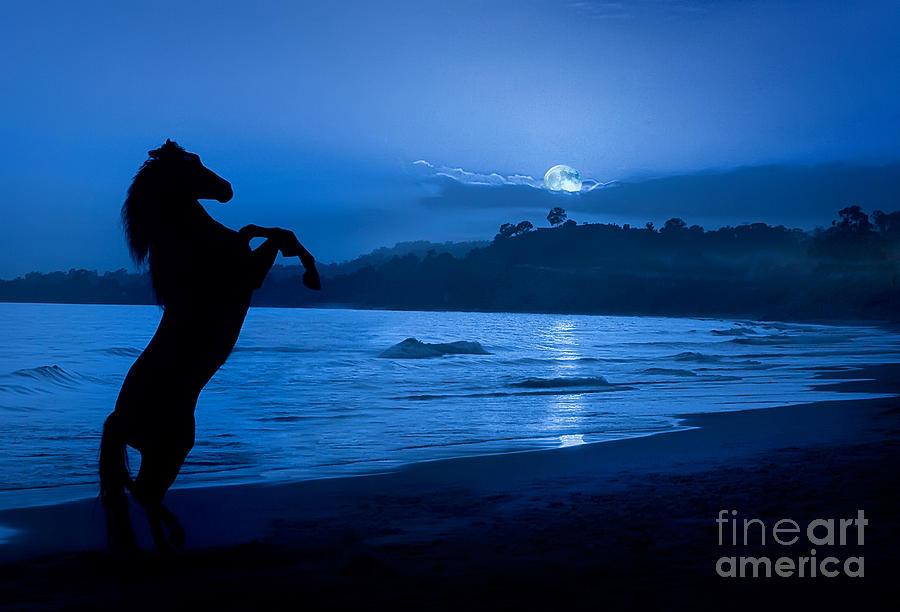 Midnight Stallion Photograph  - Midnight Stallion Fine Art Print