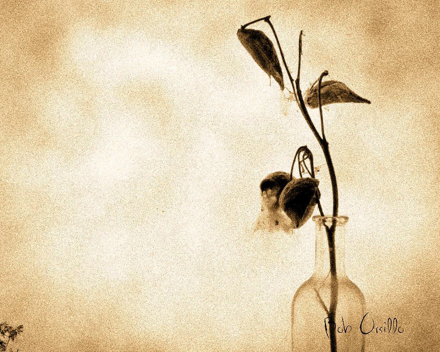 Milk Weed In A Bottle Photograph