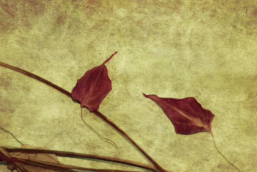 Minimal Art Photograph