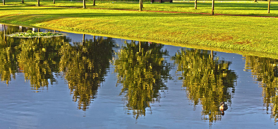 Mirroring Trees Photograph  - Mirroring Trees Fine Art Print
