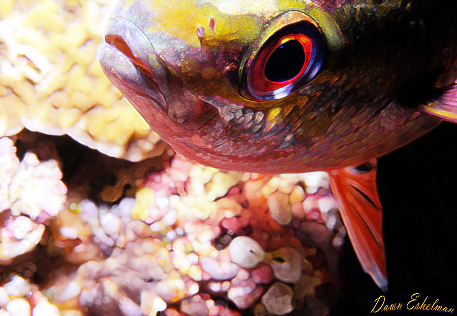 Miscellaneous Fish 5 Photograph  - Miscellaneous Fish 5 Fine Art Print