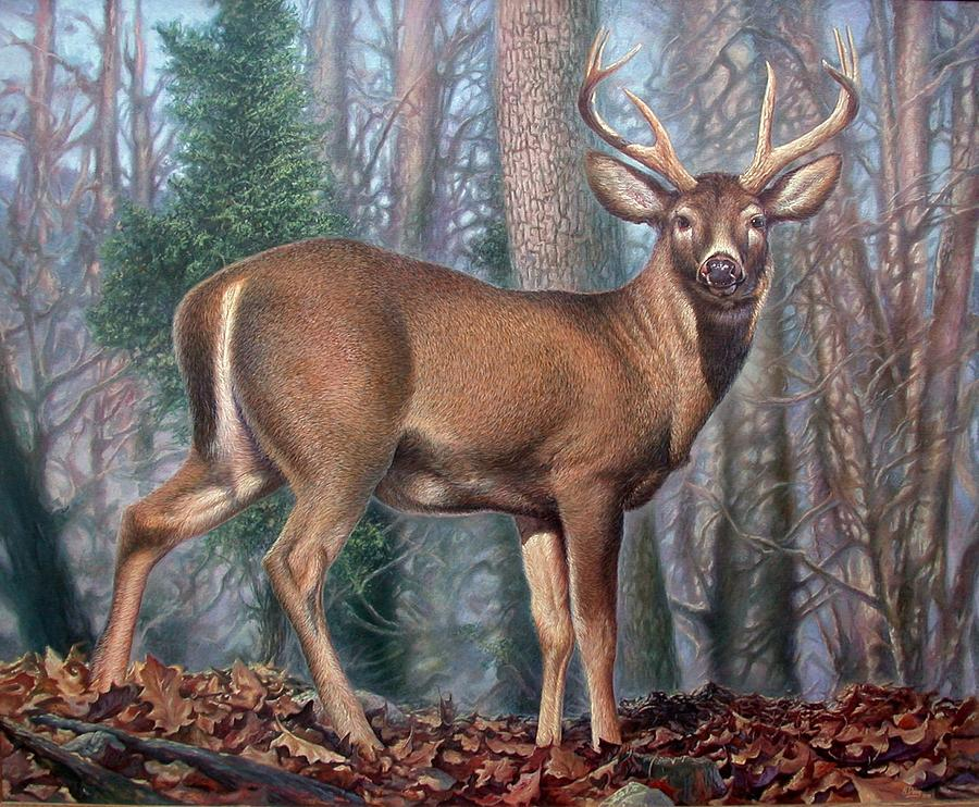 Missouri Whitetail Deer Painting  - Missouri Whitetail Deer Fine Art Print