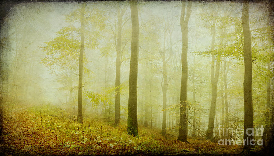 Mist In The Woods Photograph  - Mist In The Woods Fine Art Print