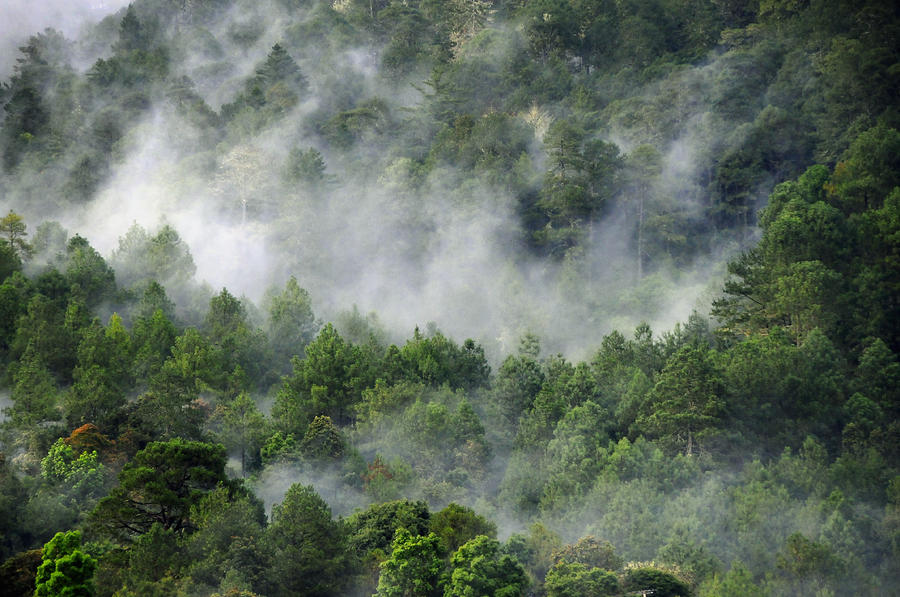 Mistico De San Jose De Pacifico Photograph