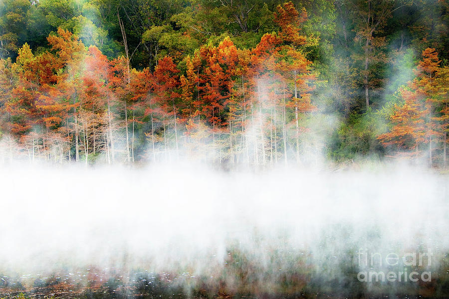 Misty Autumn Morning Photograph