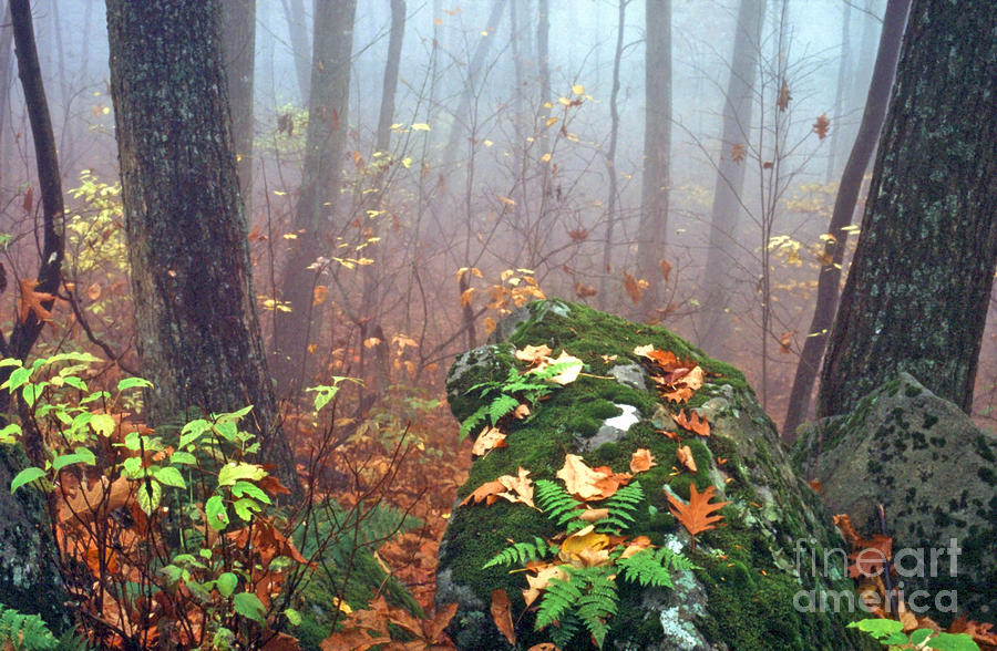 Misty Autumn Woodland Photograph  - Misty Autumn Woodland Fine Art Print