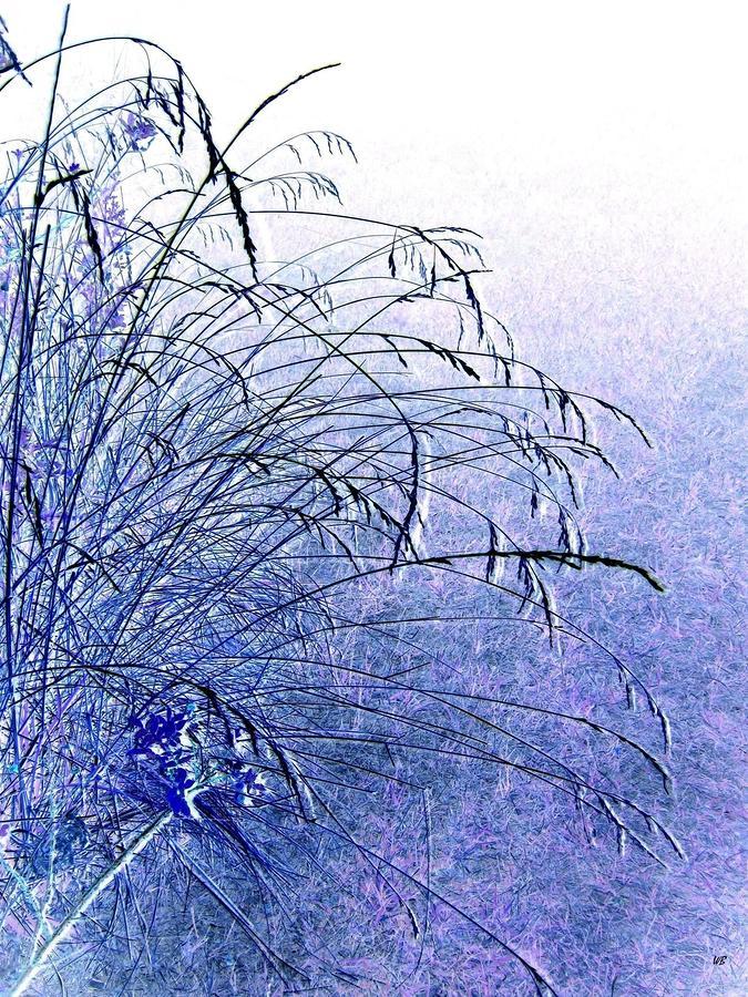 Misty Blue Photograph - Misty Blue by Will Borden