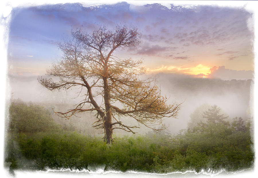 Misty Mountain Photograph