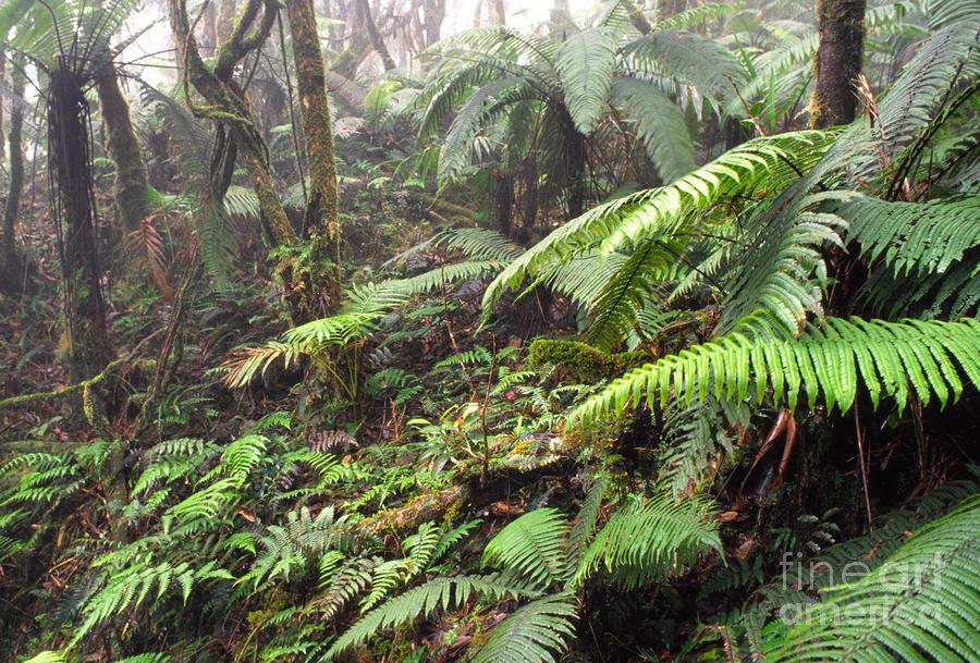 Misty Rainforest El Yunque Photograph