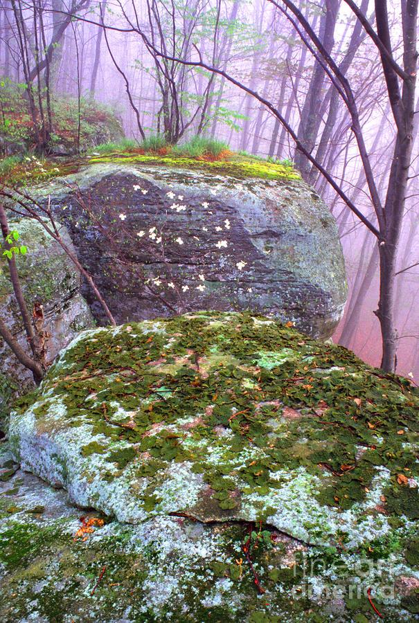 Misty Woodland Scenic Photograph